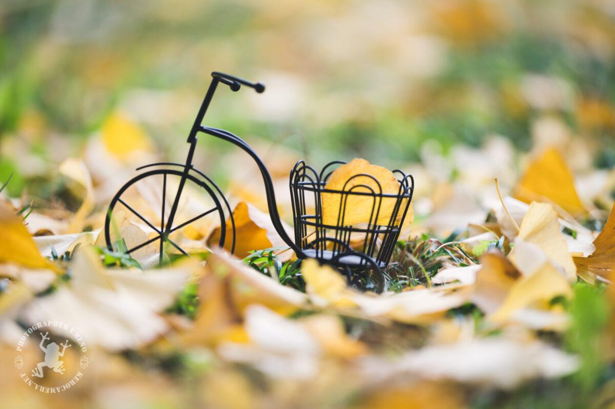 クラシカルな自転車と紅葉