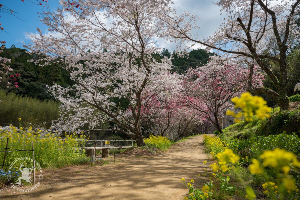 西川花公園の写真