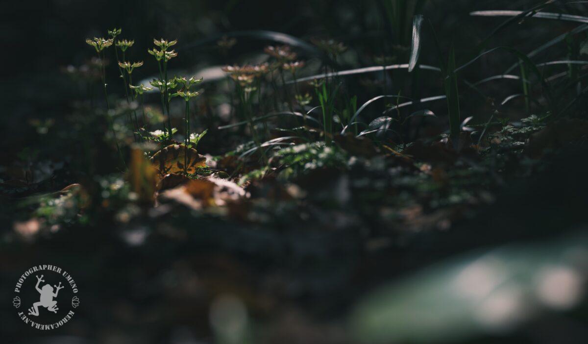 牧野植物園で撮影した写真