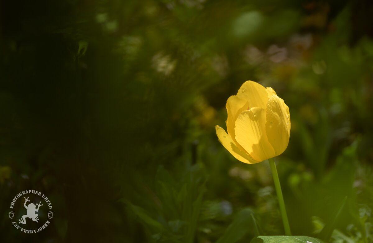 モネの庭の写真