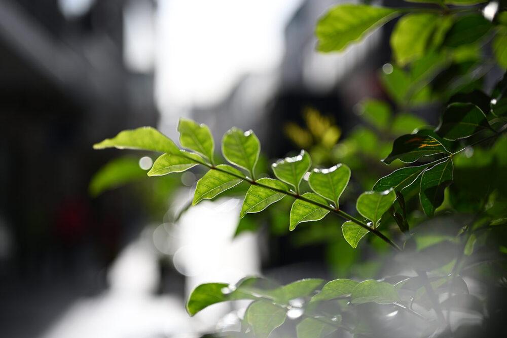 NIKKOR Z MC 50mm f/2.8で撮影した写真