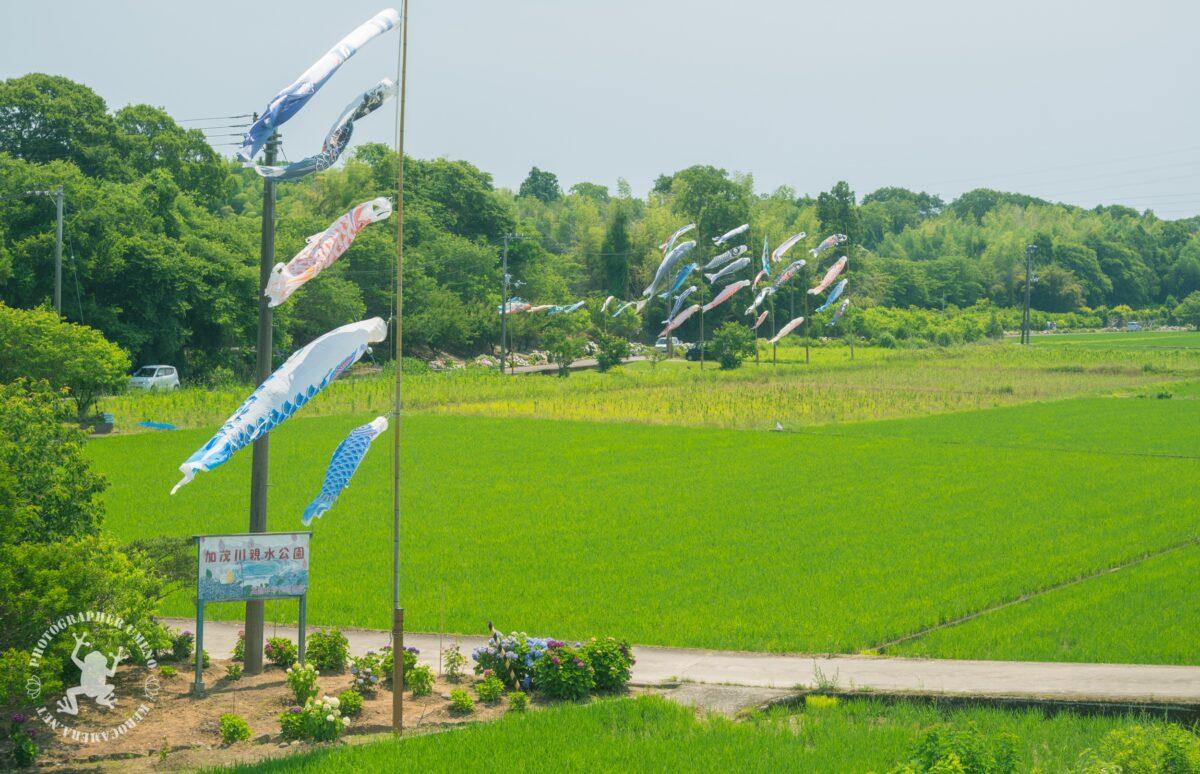 加茂川親水公園を写真撮影