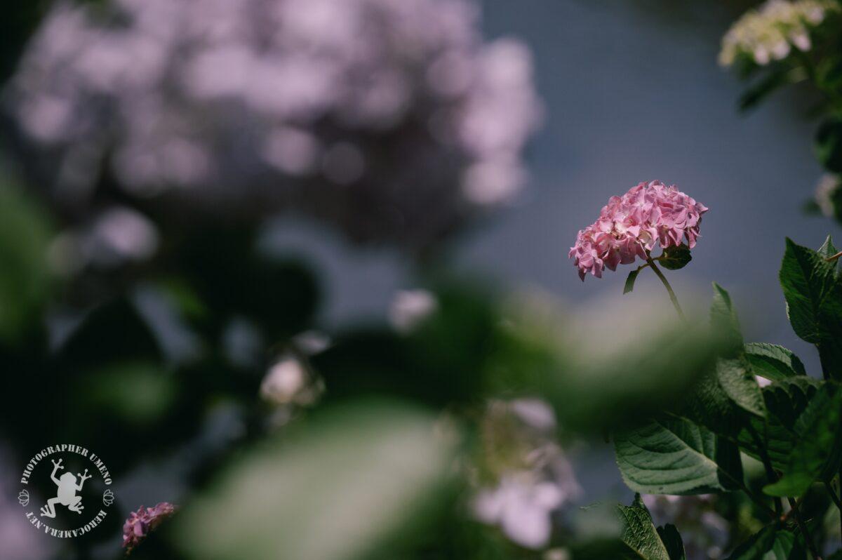 加茂川親水公園で写真撮影