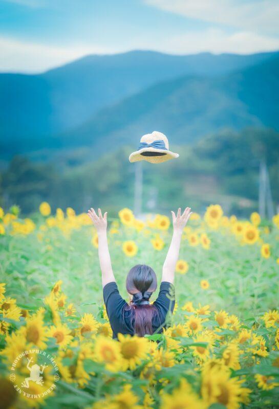 高知県土佐市出間のひまわり畑
